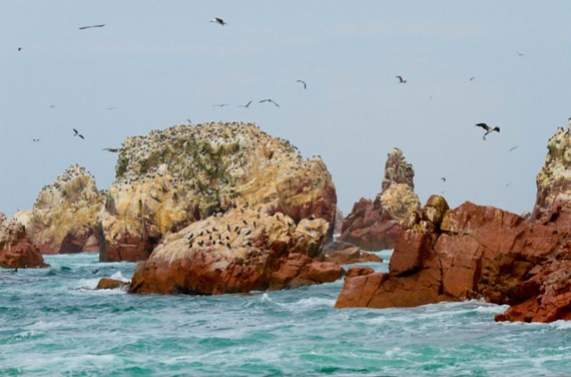 Ballestas 鳥島