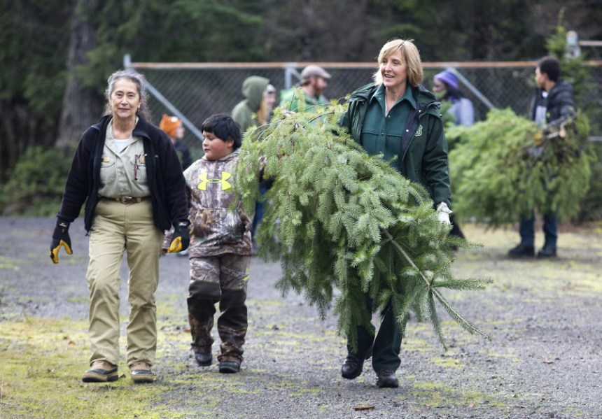 Gifford Pinchot Holiday Tree Cut