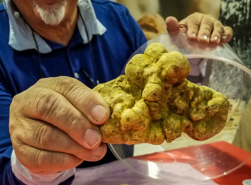 An old man showing a big yellow truffle to the camera