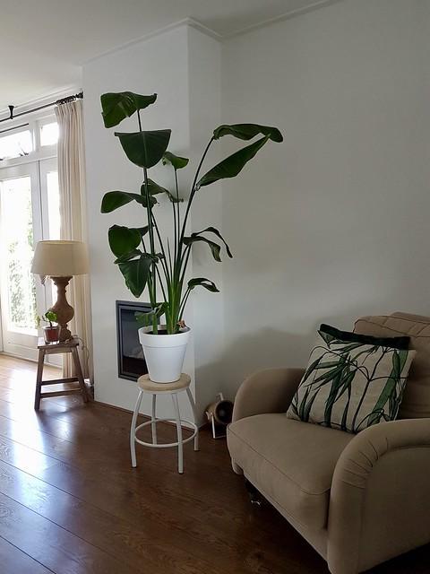 Groene plant op krukje woonkamer landelijk