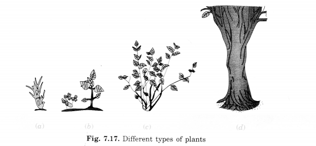 Getting to Know Plants Class 6 Extra Questions Science Chapter 7 - 2
