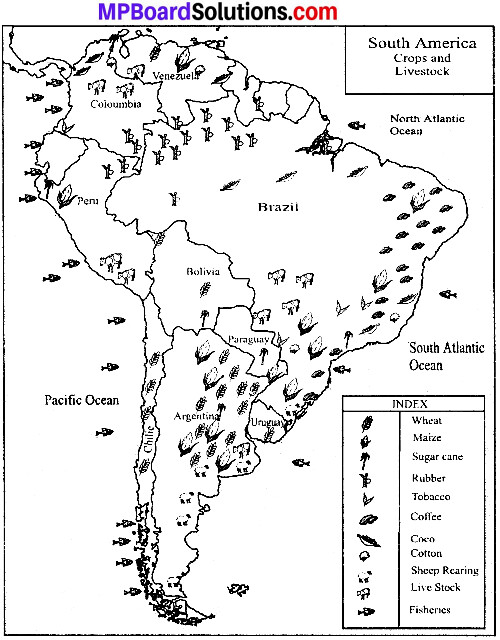 MP Board Class 8th Social Science Solutions Chapter 16 South America-Economic Features 1
