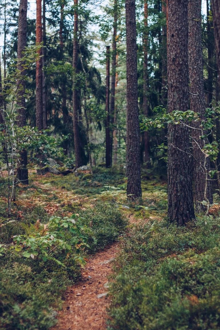 Skogsstig - reaktionista.se