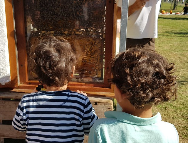 Appelplukdagen 2019 fruitplukdagen bijenkorf