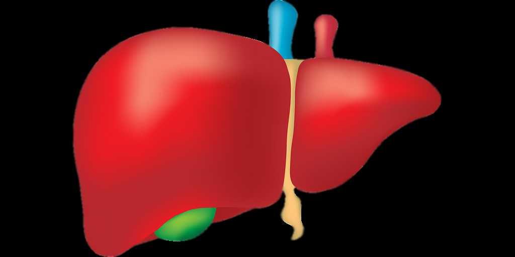 maladie-du-foie-bactérie-intestinale