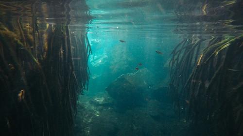 Cenote Cristalino, Mexico
