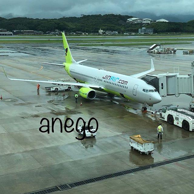 初めて乗ったジンエアー。狭いけど、福岡から仁川ならば、東京行くより近いのよ。機体はお気にの、おチビ737。 LCCなのに、入国カードセットくれるし、動いてから書こうと思ったら、ペンがない人と思われたらしく、ペンまだ渡された。ちゃんと返したよ💦 アシアナでも大韓航空でもこんなのなかったぞ! #韓国旅行 #ソウル旅行 #ジンエアー