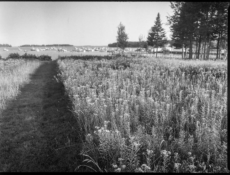 mowed pathway II, meadow, harbor, Owl's Head, Maine, Mamiya 645 Pro, mamiya sekor 45mm f-2.8, Arista.Edu 400, HC-100 developer, 9.7.19 (1 of 1)