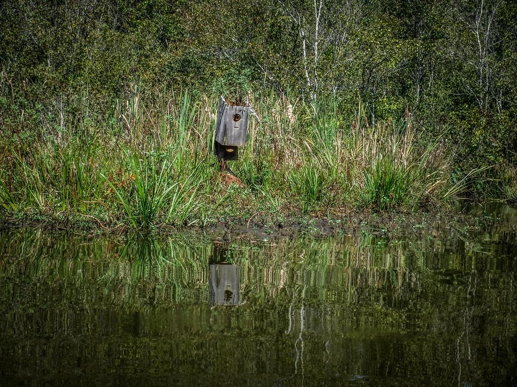 Berry Shoals Pond-49