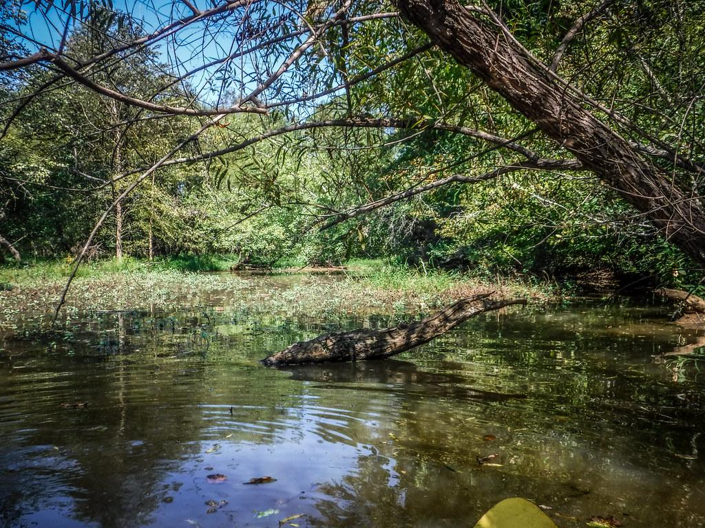 Berry Shoals Pond-9