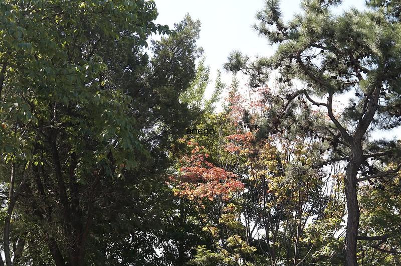 水原華城の秋