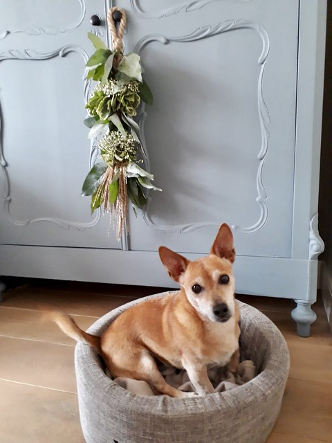 Hondje in ronde hondenmand