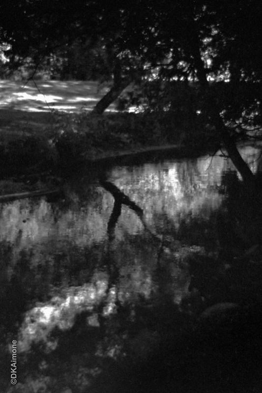 Creek Forms