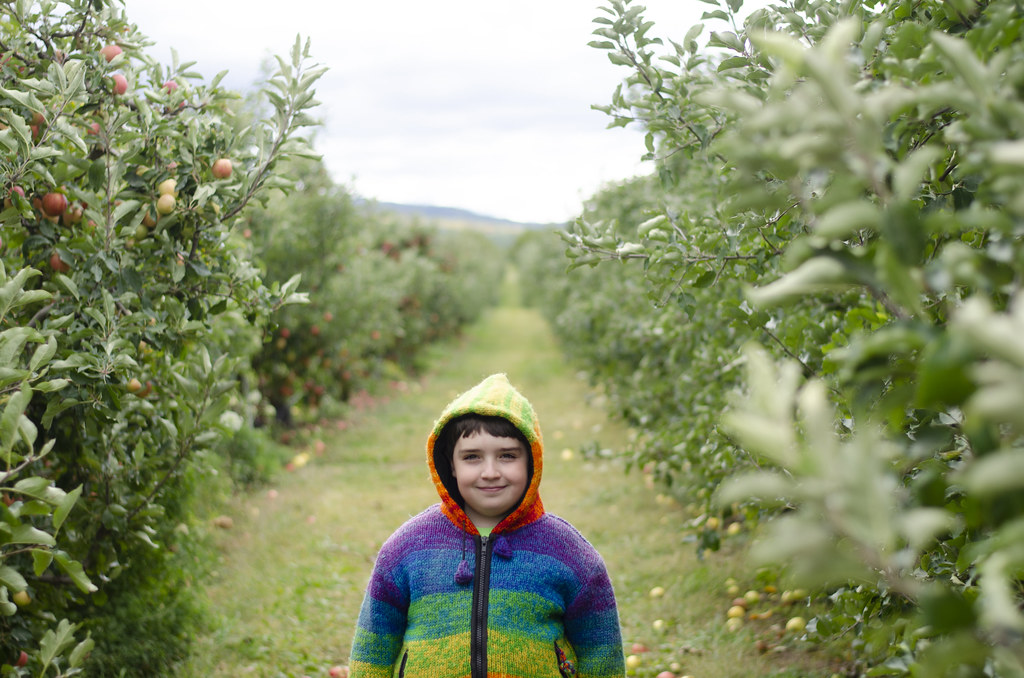 apple picking - 1