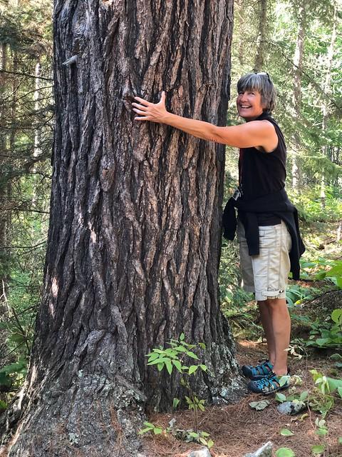 Caliper Lake - Linda found the bigest tree on our nature walk
