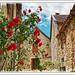 Les rues de Villeneuve - Le rosier grimpant