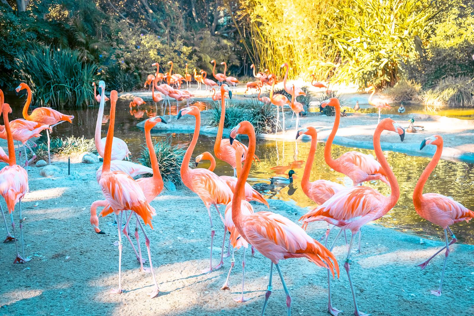 San Diego Zoo Flamingos | One Day in San Diego Itinerary