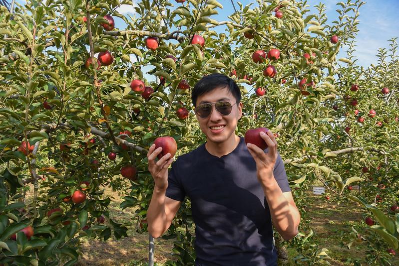 fruit picking in Minakami, Gunma