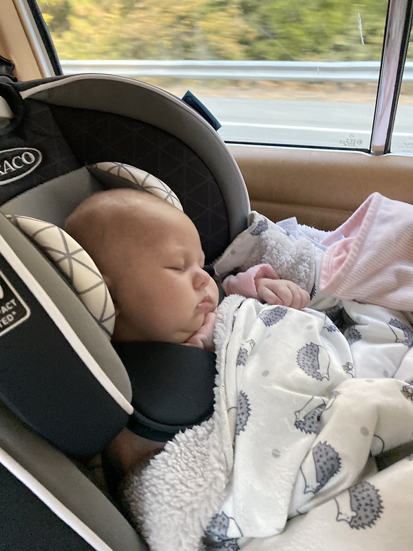 Snoozing on the road