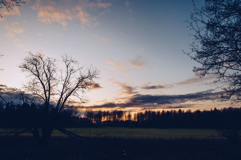 Oktoberskogen i solnedgång - reaktionista.se