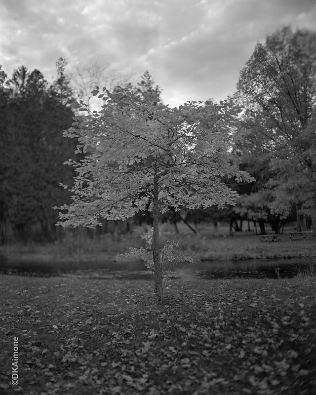 Park, Tree, Autumn