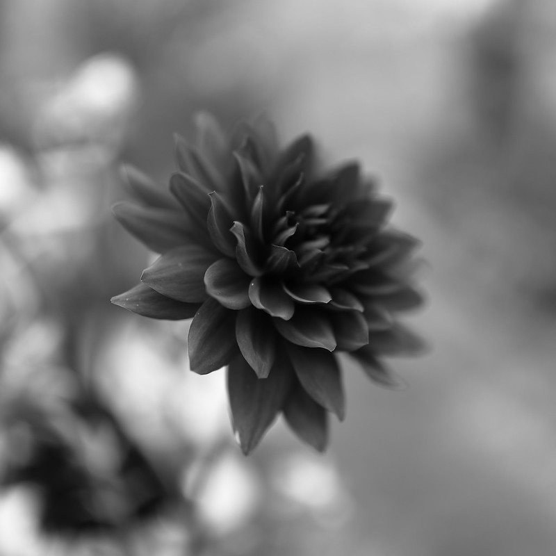 square bnw flower