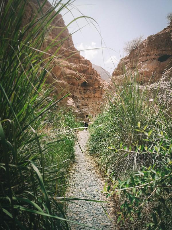 Wadi (31)