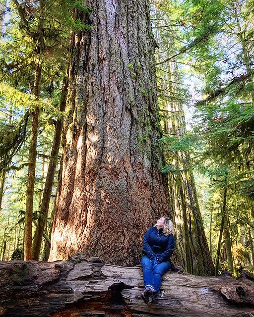 Hanging out with giants in #macmillianprovincialpark. #cathedralgrove @yourbcparks #explorebc #mypqb @parksvillequalicumbeach @tighnamara #mypqbvancouverisland #explorevancouverisland