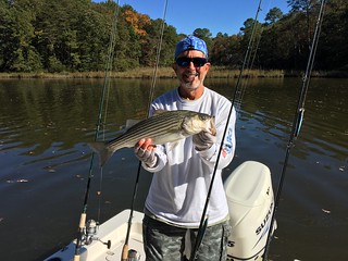 Photo of Man holding up a striped bass