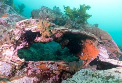 Small archway at Bare Island #marineexplorer #underwatersydney