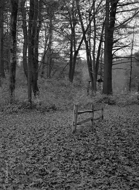 Lone Fence