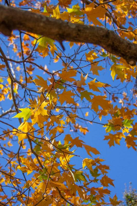 Leaf Peeping Coolidge Park8