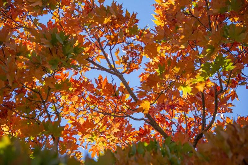 Leaf Peeping Coolidge Park2