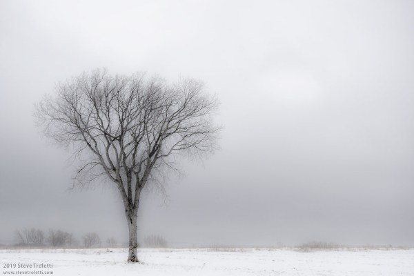 The Solitary Tree / L'arbre Solitaire