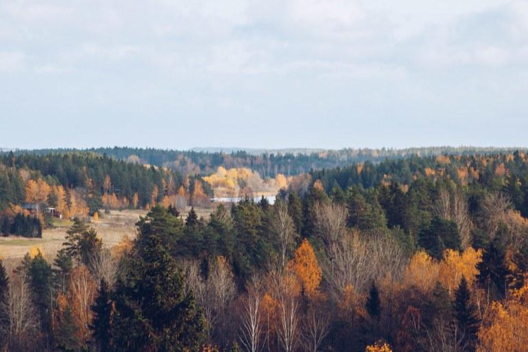 Oktoberskogen Sörmland - reaktionista.se