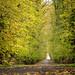 L'allée des Tilleurs de Lignereuil en automne