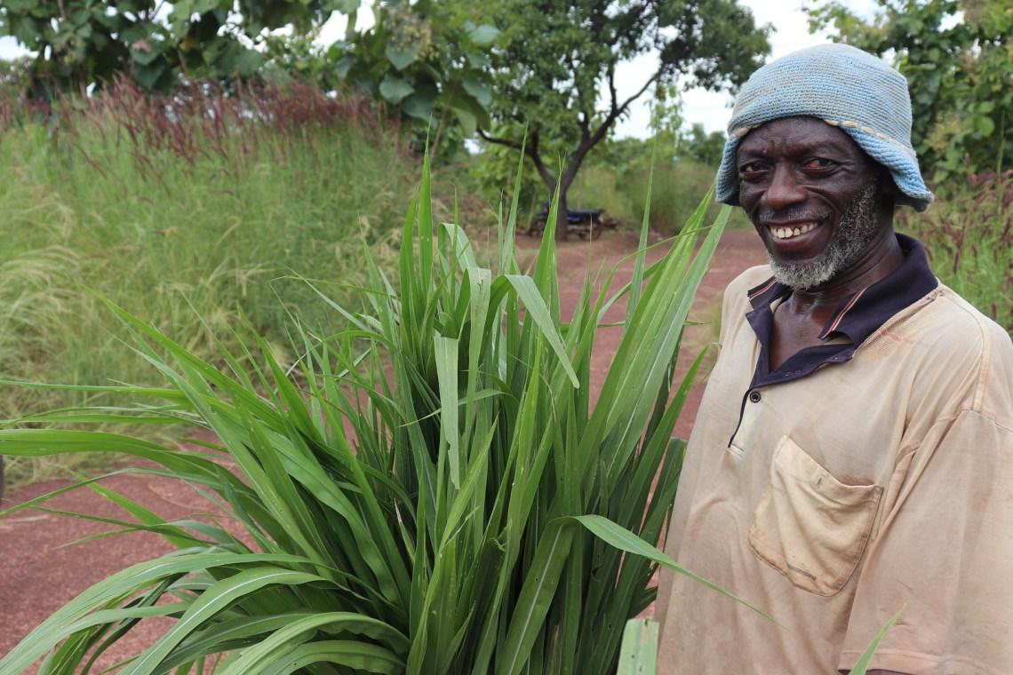 A farmer at Duko says Food Security is sure for my ruminants. Photo credit- Wilhelmina Ofori Duah -IITA