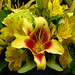 Very Cool Flowers