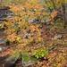 A rainy autumn day on the Eno (4)