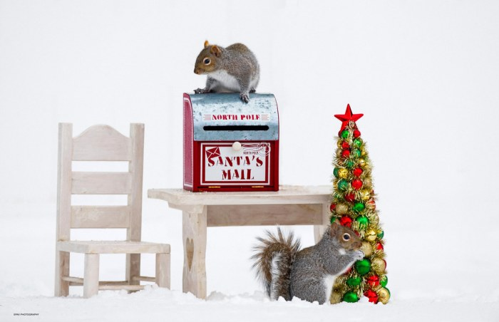 Christmas for the squirrels