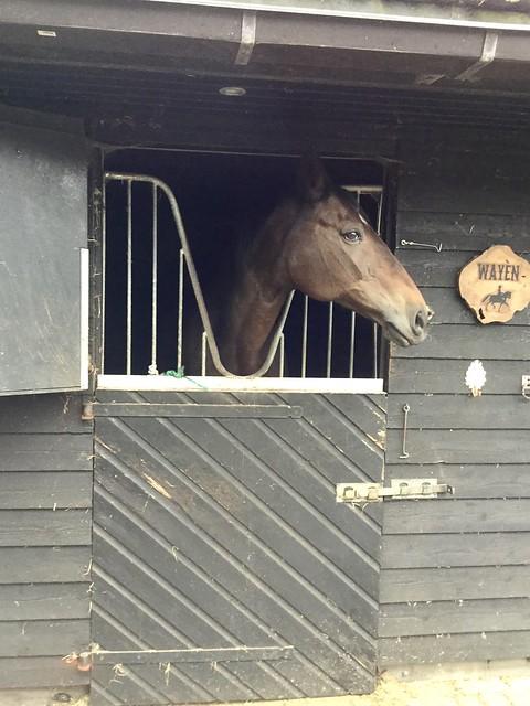 Paard in zwarte stal