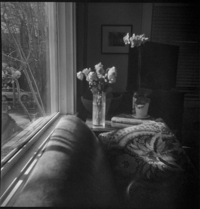 roses, orchids, patterned pillow, couch, picture window, Asheville, NC, Eho Altissa box camera, Bergger Pancro 400, CineStill Film Df96 Monobath developer, 12.27.19