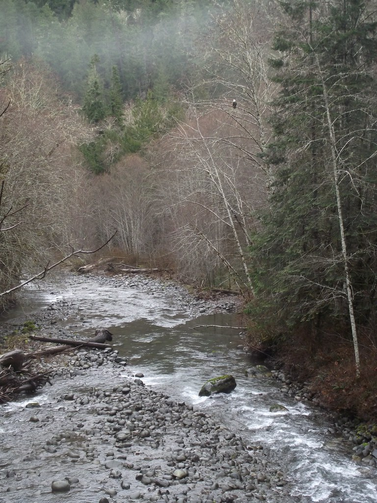201912_Gray Wolf River, USFS photo by Karen Holtrop.