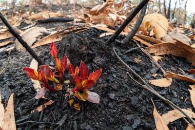 Sprouts of hope #marineexplorer #Australianbushfires #Climatechange