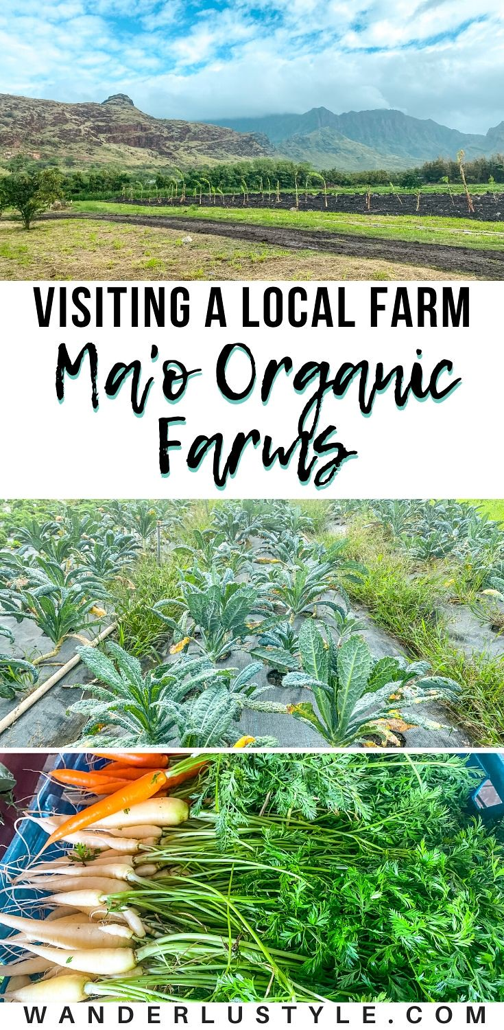 Ma'o Organic Farms - Waianae, Hawaii - Foodland Hawaii #EatLocalToday