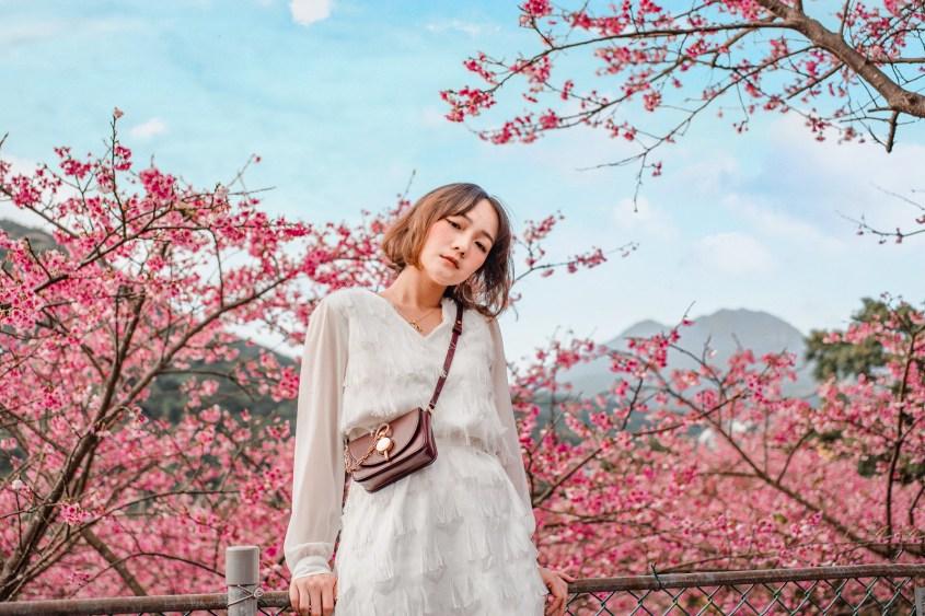 平菁街櫻花2020 台北粉紅櫻花海。陽明山交通IG拍照懶人包