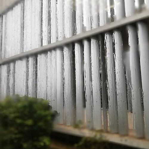 Plou, i fa vent, i plou... Però s