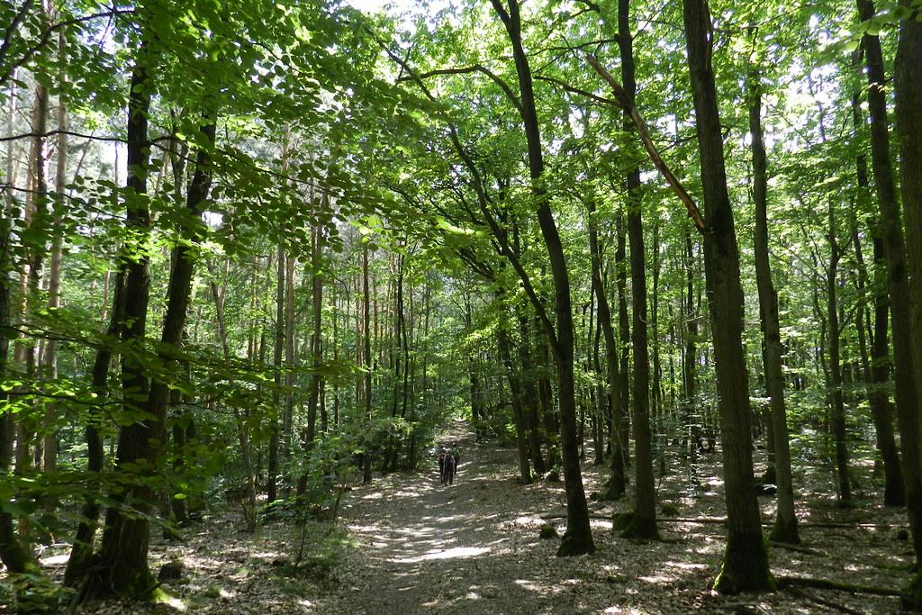 Parque Natural del Rin Taunus Naturpark Rhein-Taunus Wiesbaden Valle del Rin Alemania 07