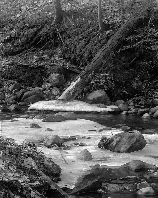 Fallen Tree, Frozen Creek