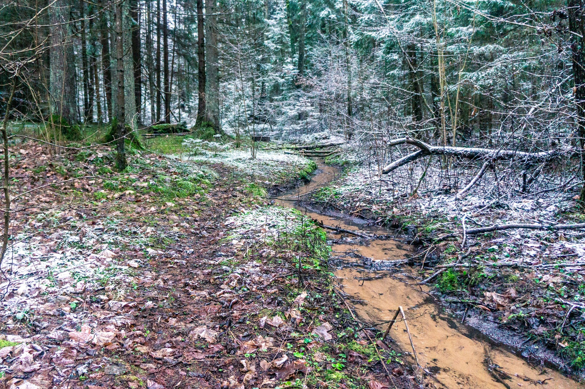 Лесные ручейки